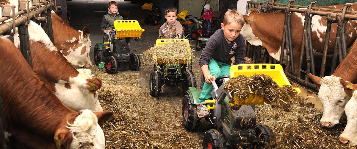 traktor_kuhstall