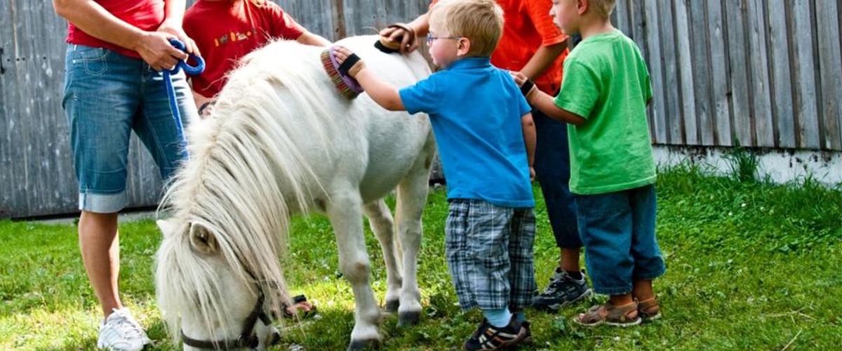 pony_putzen