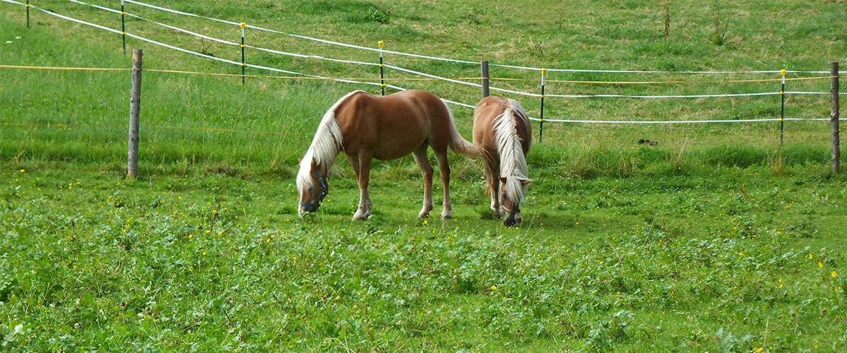 die_beiden_pferde