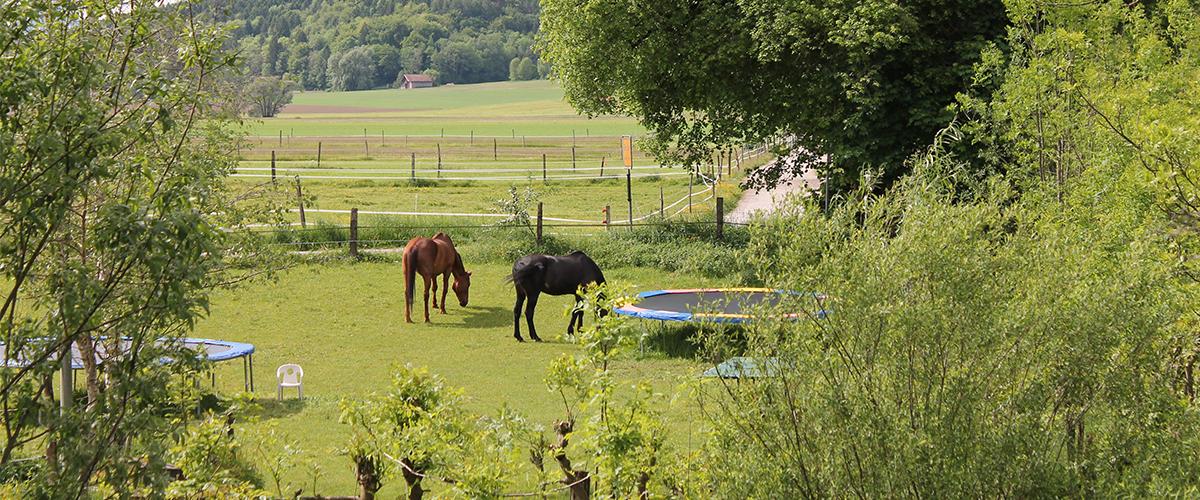 trampolin_pferdewiese