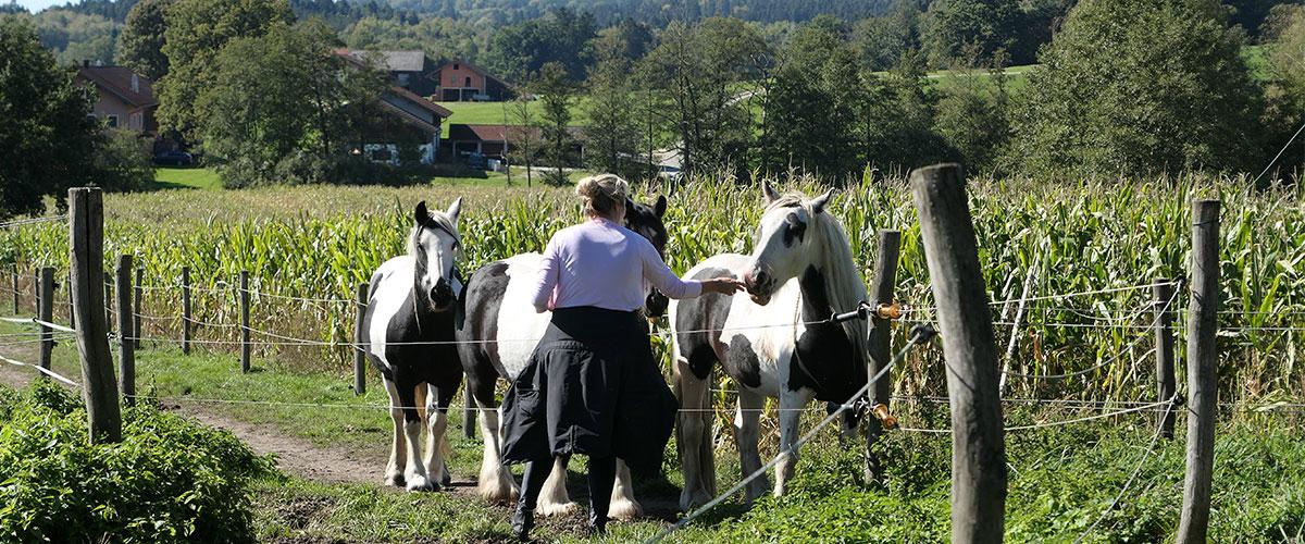 Pferde_füttern